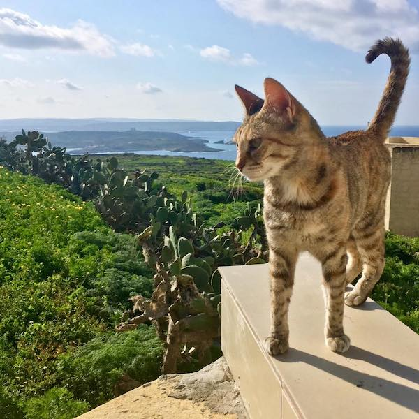 Cute cat that got me a valuable backlink. Find out how long it will take to rank on Google with tips on ranking faster on Google. #SEO #searchengineoptimization