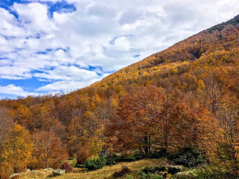 Forest in fall. Read how to optimize your seasonal content given SEO traffic fluctuations to bring more traffic to your website. #SEO #searchengineoptimization #contentcalendar #blogging