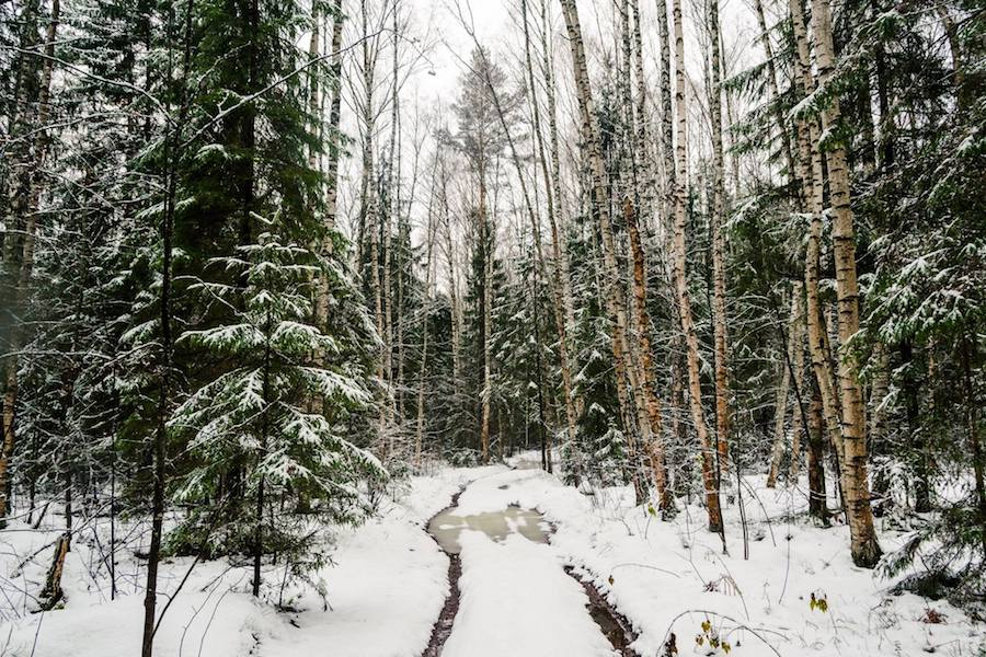 Forest in winter. Read SEO tips about seasonal fluctuations in SEO and how to prevent your website traffic from declining due to seasonal queries/content. #SEO #searchengineoptimization #data