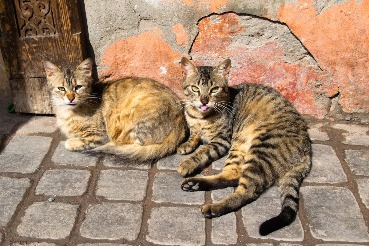 Cute cats in Morroco. Read what to do when someone is a copycat online who steals your content and your SEO keywords! #cats #SEO