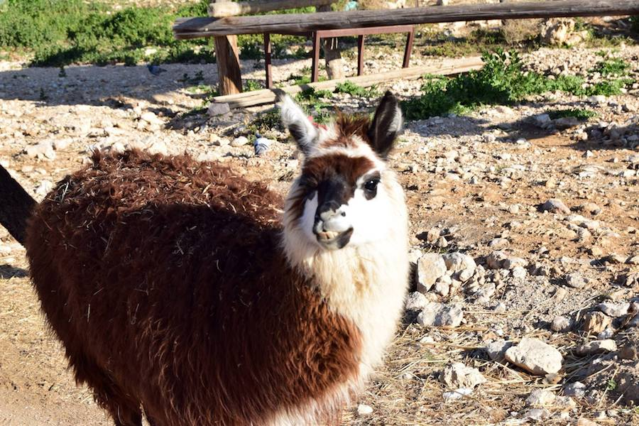 Alpaca plotting. Read how to recognize a negative SEO attack.